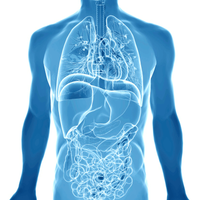 blue body with visible organs